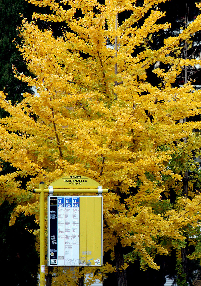 Autumn at the bus stop