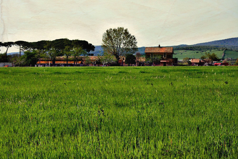 The house in the green field
