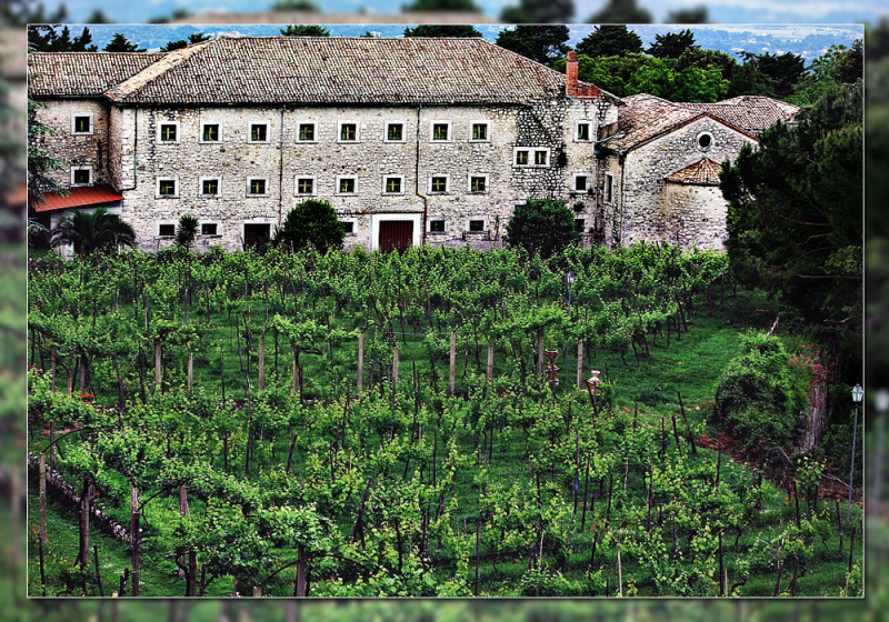 The vineyard of the priest