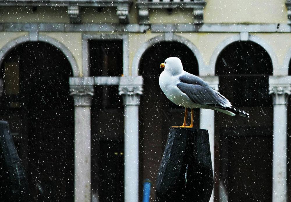 A strange spring in Venice 2