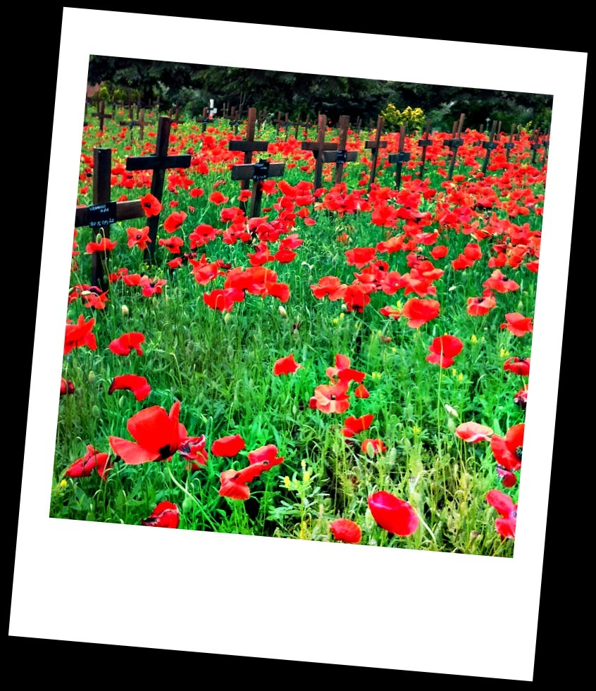 1000 red poppies