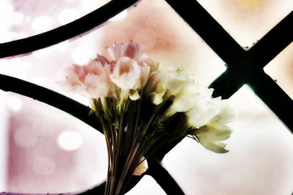 Jasmine fragrance 2