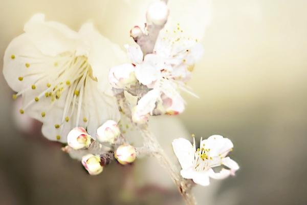 Spring to the door ...