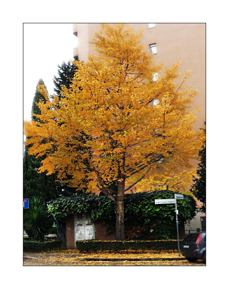 The last autumnal yellow