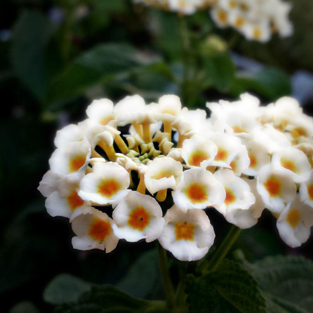 Petites fleurs 2