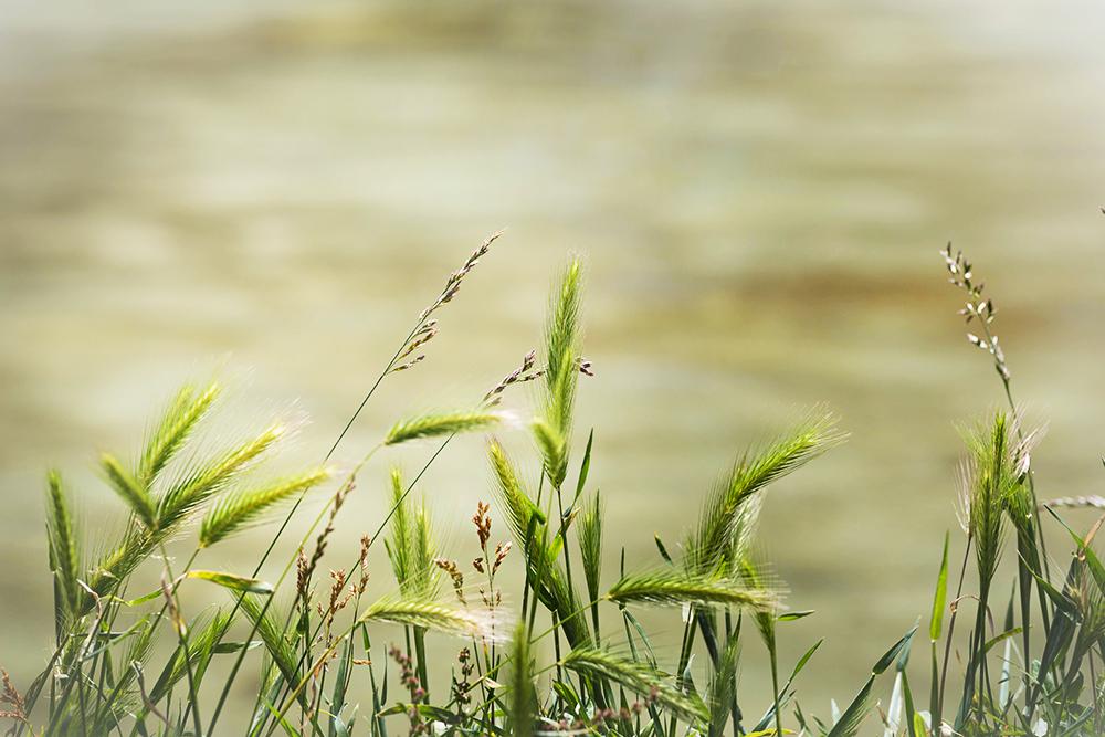 landscape, grass, narture
