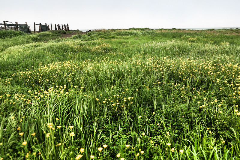 sea, grass, sky, meadow, landscaoe