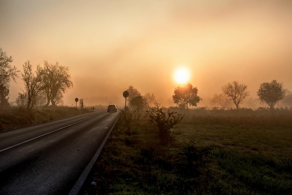 Morning in the fog