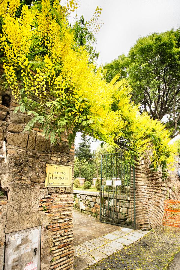 Roman Rose Garden