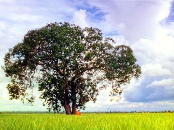 Outing: Sekinchan paddy fields