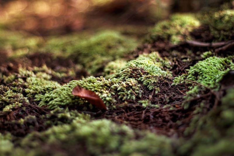 bukit tabur: rumput karpet
