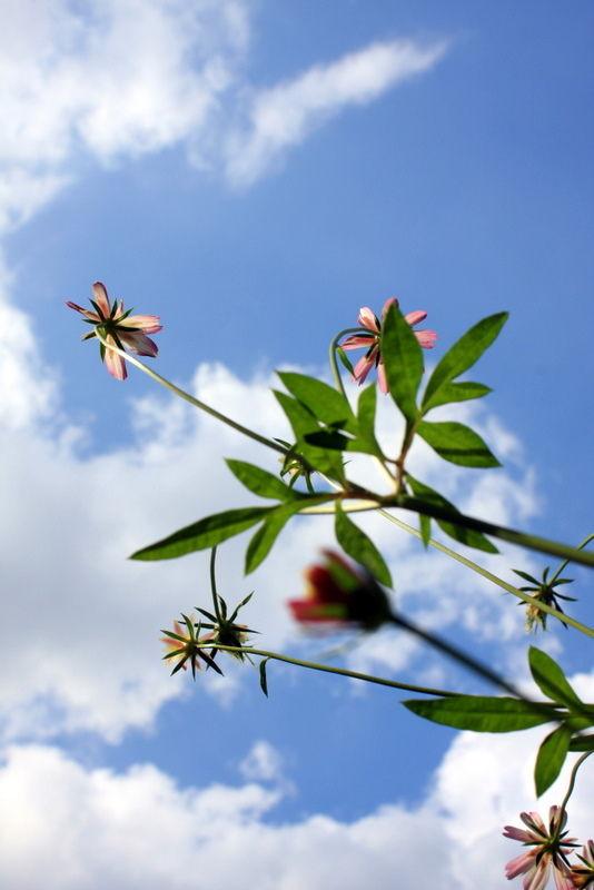 flower sky clouds