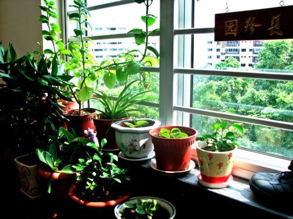 The lil' balcony garden