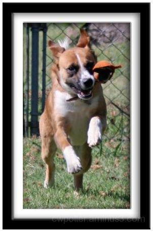 Crazy Colbie Dog