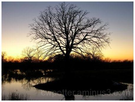 Tree & Sunset