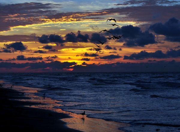 Galveston 2011