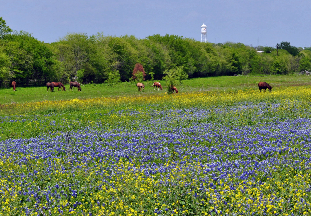 flowers in texas