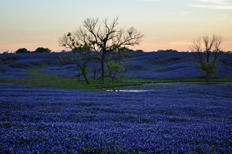 Here is my entry in the Place I Live community event. This is what parts of the Texas prairie look like in April. Some of my earliest memories are of these flowers. Springtime has always been associated with bluebonnets and is an annual reminder of rebirth and resurrection of heart, mind, and soul!