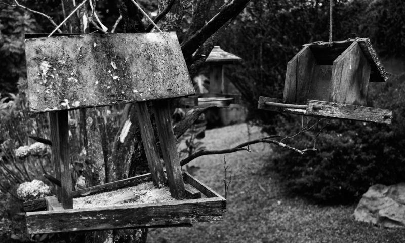 Bird Feeders in B&W