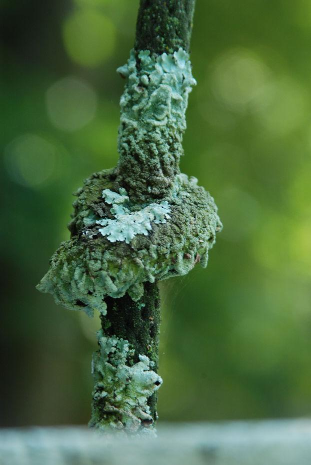moldy knot