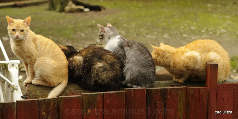 Cats congregating on a cold morning...