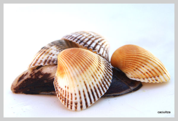 Shells on a chair at the beach - an experiment