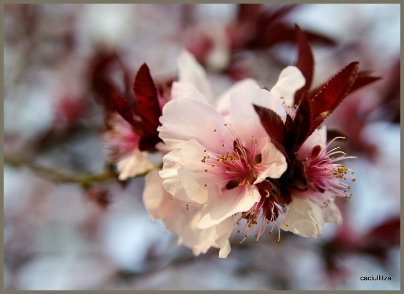 Random spring pics
