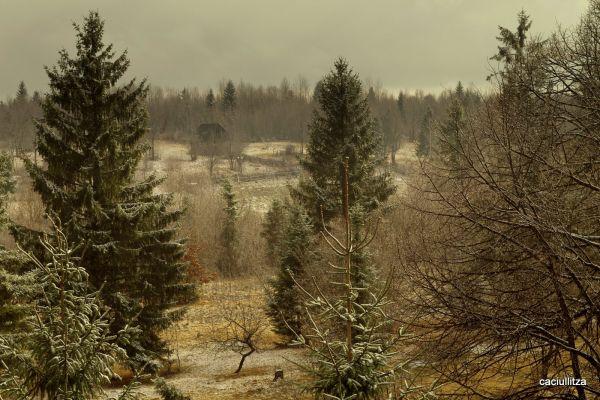 Late fall in Harghita