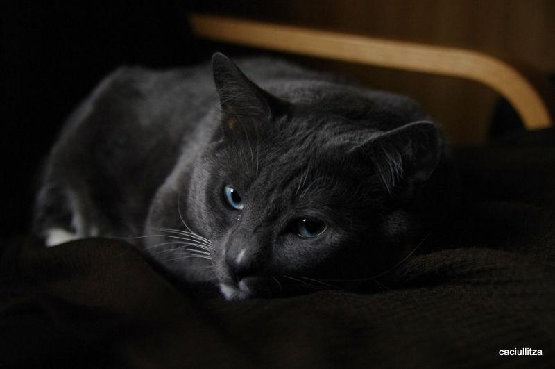 Cat ignoring me...
