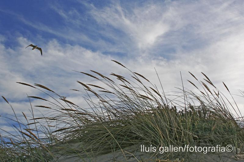 praia de mira - portugal