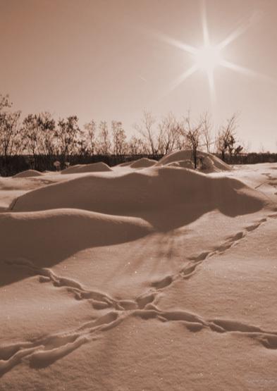 Sat Obogeni, Com. Stoilesti, 19.02.2012 Dunes