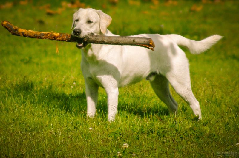 Fetch, retrive, aport