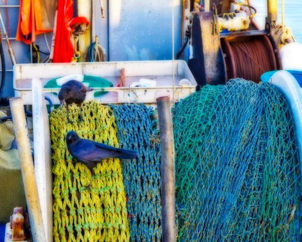Santa-Barbara, harbor,fishing-boat,crows