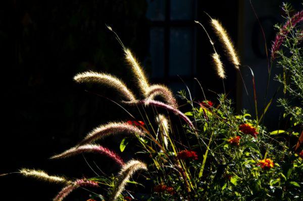 Grasses No. 2