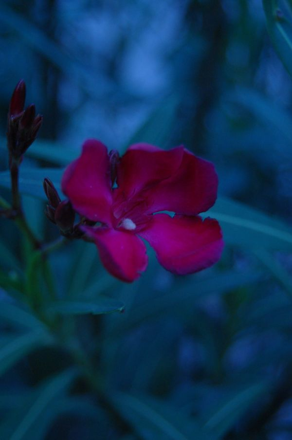 flower in the dark