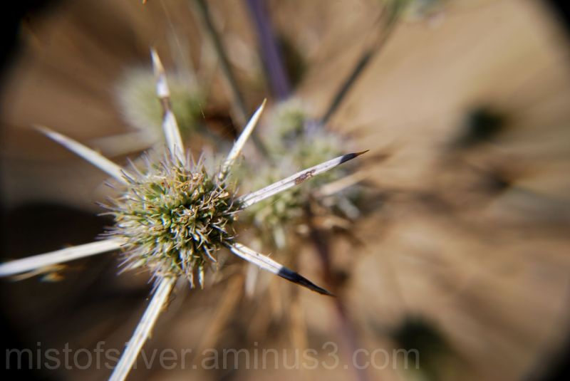 Thistle & Weeds