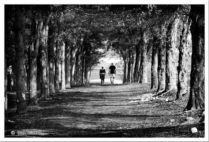 Let´s take a walk