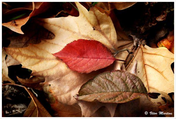 Fall Compo