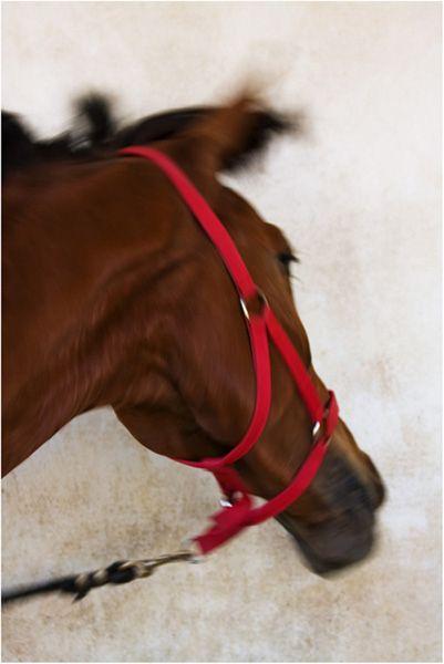 Horse (2)