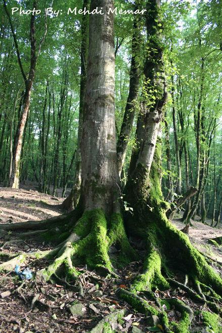 Naharkhoran Forest