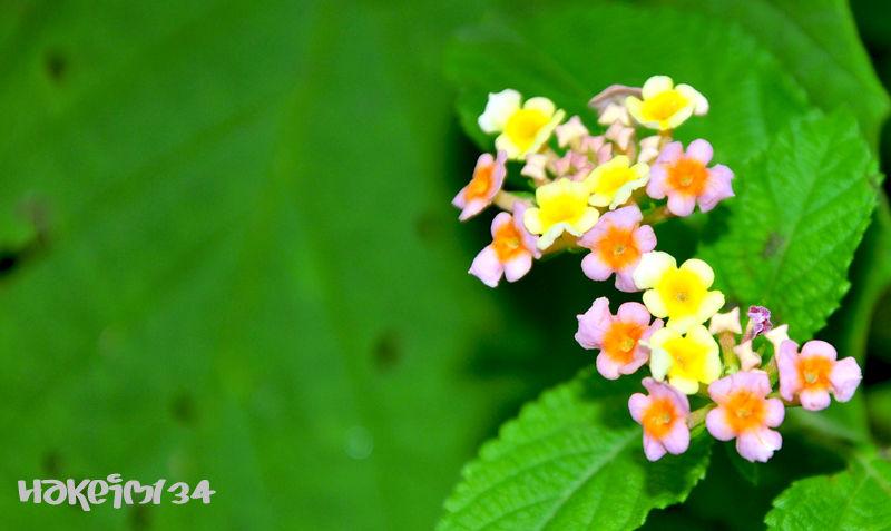 Assorted Flower Colour