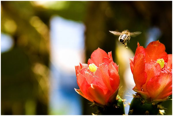 Monaco,Macro,Photoblogs,Bees.