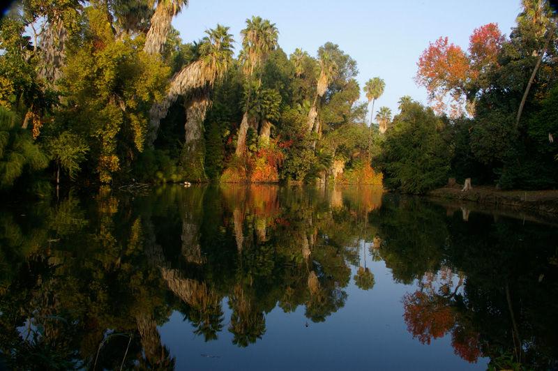 Pond at Los Angeles Arboretum