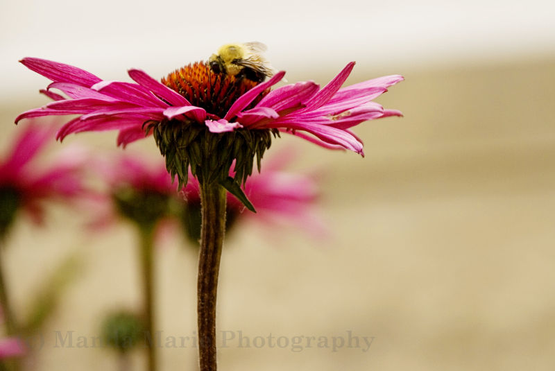 The Bee and Me 2