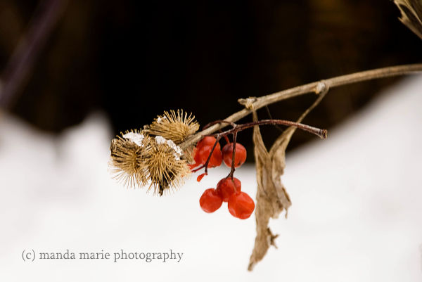 Splash of Red Berry