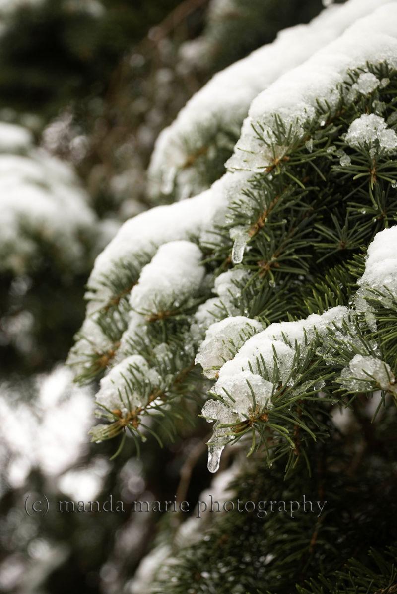 Morning Snow Fall