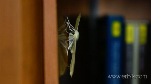 butterfly on cupboard
