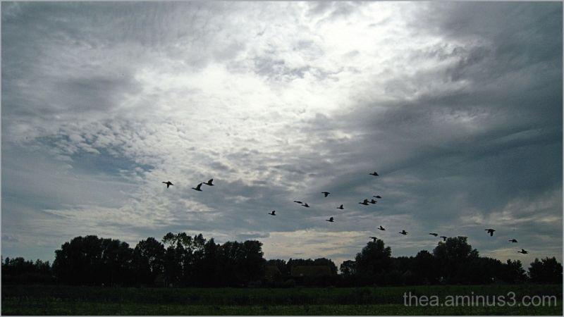 landscape nature birds ducks