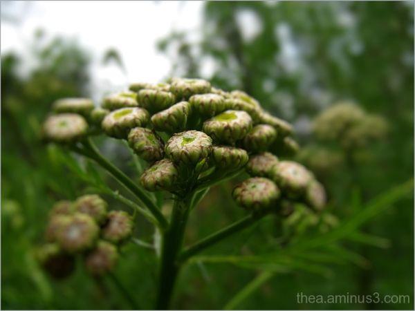 nature macro flower white