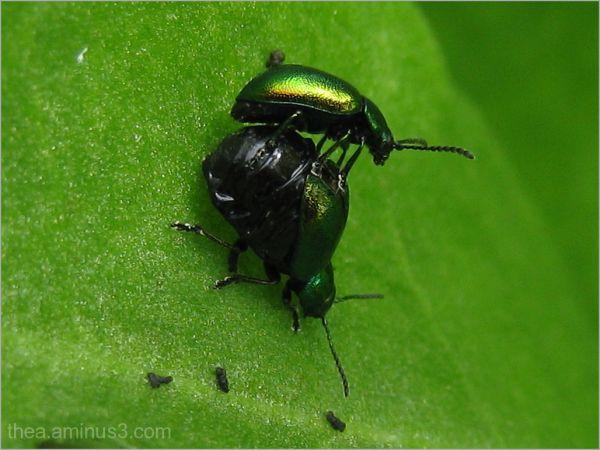 macro insect  garden
